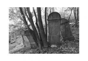 Vrbovce – židovský cintorín